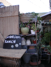0109blogpicDandelionRanch6