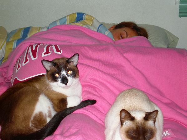 2009_04_24SICK&CATS